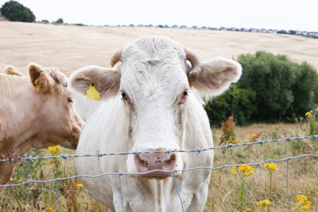 livestock-640